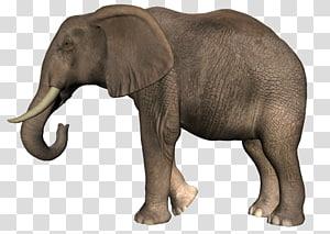 African bush elephant African forest elephant , elephant PNG