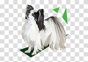 Dog breed Feather,