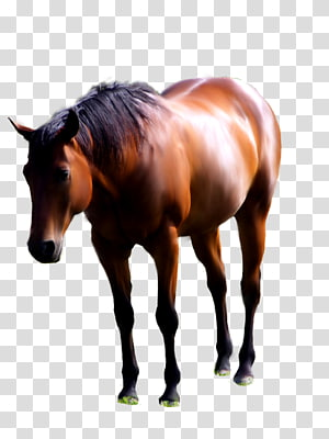 American Paint Horse Andalusian horse Mustang Foal Stallion, horse PNG