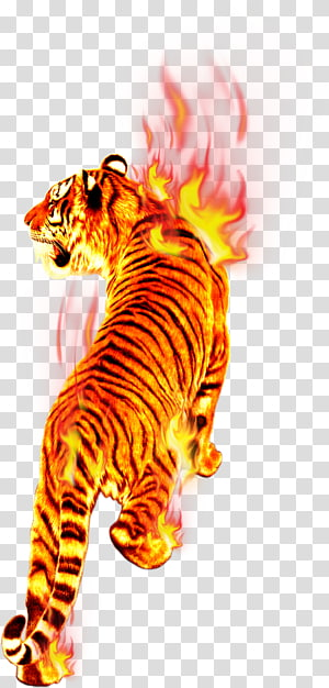 burning tiger , Flame Fire Tiger Combustion, Tiger in flames PNG