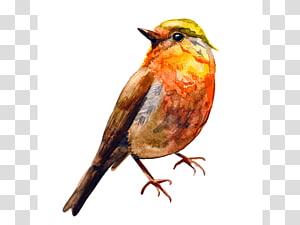 Bird European robin Watercolor painting Drawing, Bird PNG