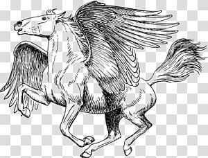 Medusa Poseidon Perseus Coloring book Pegasus, pegasus PNG