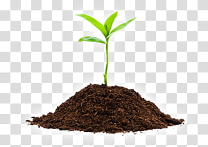 Seedling Soil Sprouting Plants, Organic Farming PNG clipart