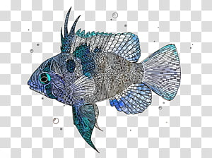 Fish, fishes PNG clipart