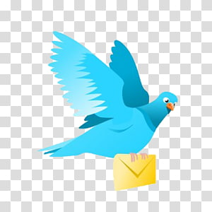 Homing pigeon Pigeons and doves English Carrier pigeon Bird, Bird PNG clipart