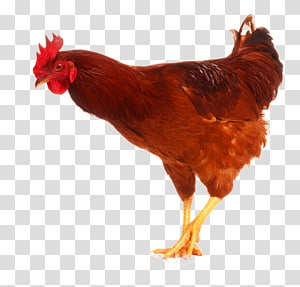 Chicken as food Rooster Poultry , chicken PNG