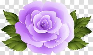 Rose Purple Violet , 3d rose PNG