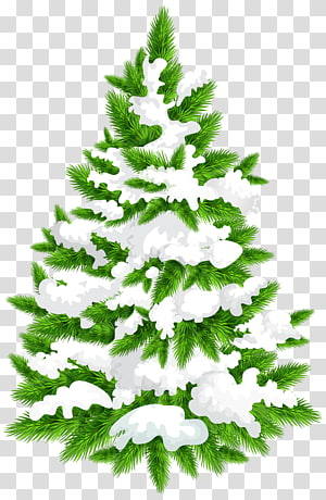 Spruce Fir Tree , tree PNG clipart