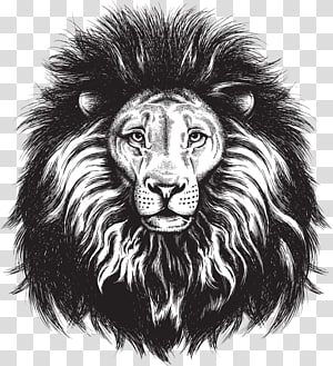 black and white sketch of lion head, Lionhead rabbit Lions Head Leopard, Painted lion head PNG