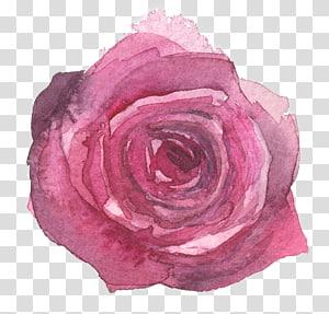 watercolor painted purple flowers roses PNG