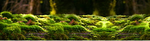 green moss, Forest, Forest background PNG clipart