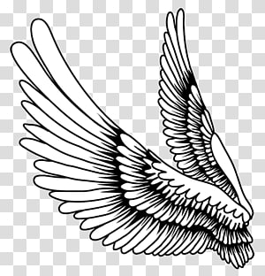 Drawing Bird Feather, Creative feather wings,Cartoon painted wings PNG clipart