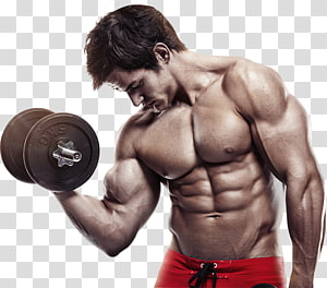 Exercise Weight training Vascular occlusion training Physical fitness Bodybuilding, bodybuilding PNG