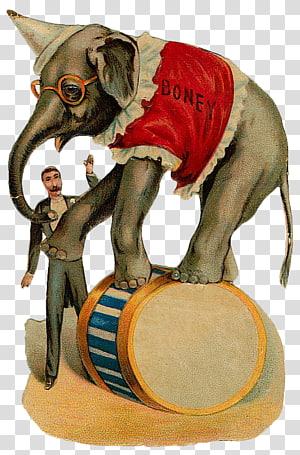 elephant on top of barrel , Circus Elephant Clown Illustration, Circus PNG