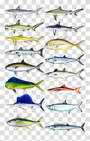 Sardine Recreational fishing Fishing Baits & Lures, Fishing PNG clipart