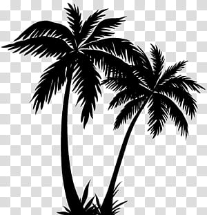 Arecaceae Silhouette Sunset, Palm Trees Silhouette PNG clipart