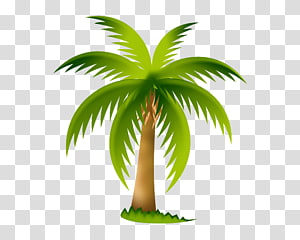 Arecaceae Tree , overlooking the coconut tree PNG clipart