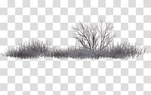 Black and white PicsArt Studio Tree, vegetation PNG