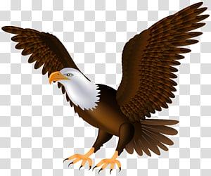 Bald Eagle Bird , eagle PNG