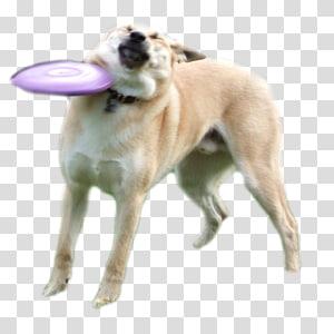 Dogecoin Internet meme Shiba Inu, meme PNG
