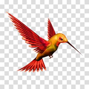 Hummingbird Kingfisher , Bird PNG