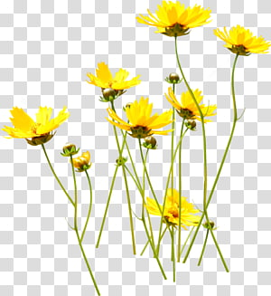 Flower Yellow , flower PNG clipart