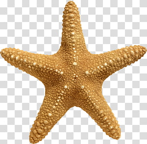 Rotational symmetry Sea Starfish , anchor PNG clipart