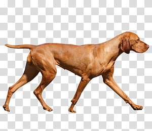 Wirehaired Vizsla Redbone Coonhound Dog breed Hunting dog, others PNG