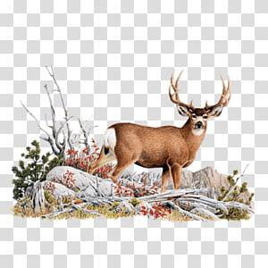 Reindeer White-tailed deer Red deer Glen Affric, Reindeer PNG clipart