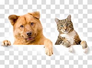 Dog–cat relationship Puppy Kitten Chow Chow, Cat PNG clipart
