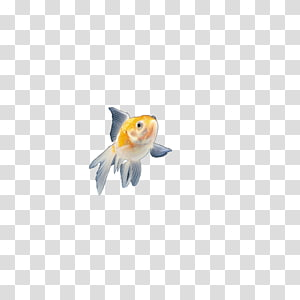 Carassius auratus Fish Pet Animal, Insects, fish PNG