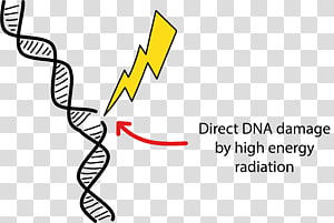 DNA damage Radiation therapy Cell, energy PNG clipart
