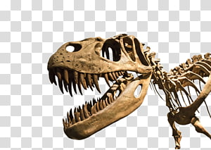 hd dinosaur fossils PNG clipart