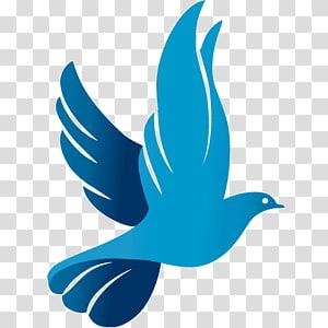 Columbidae Rock dove Doves as symbols Computer Icons Peace symbols, symbol PNG