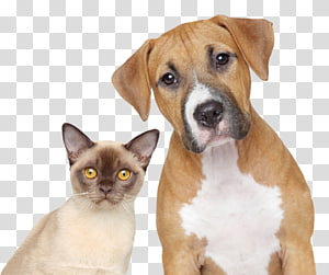 Dog–cat relationship Dog–cat relationship Pet Veterinarian, Cat PNG