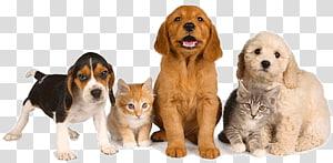 Dog Pet sitting Pet–friendly hotels Pet Shop, Pet Icon PNG
