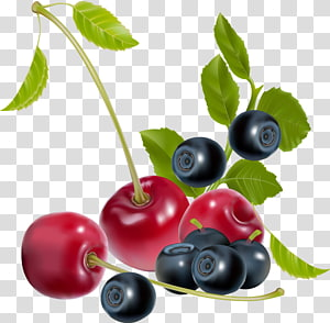 Fruit Berry , design PNG