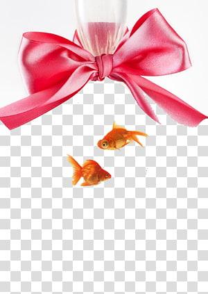 Goldfish , Bow goldfish PNG