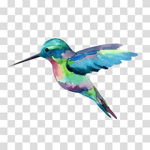 Hummingbird Watercolor painting, painting PNG
