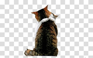 York Chocolate Kitten Love Hug , Hugging cat PNG