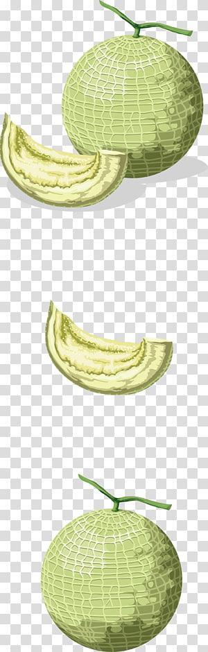 Hami melon Honeydew Cantaloupe, Green melon PNG clipart