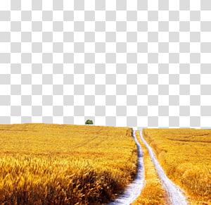 Mural Desktop , paddy field PNG