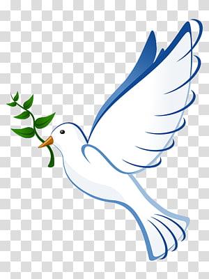 Columbidae Bird Doves as symbols Olive branch , Bird PNG