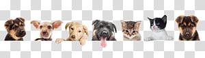 Pet sitting Dog Puppy Kitten Cat, Dog PNG