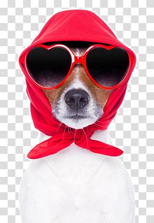 Jack Russell Terrier Golden Retriever Beagle Puppy Pet, golden retriever PNG