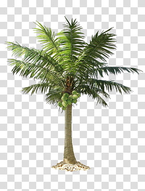 Arecaceae Tree , palm trees PNG clipart