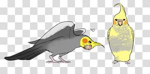 Macaw Parrot Beak Galliformes , parrot PNG
