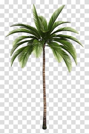 La Santa Market Arecaceae Tree , Palm branch PNG clipart