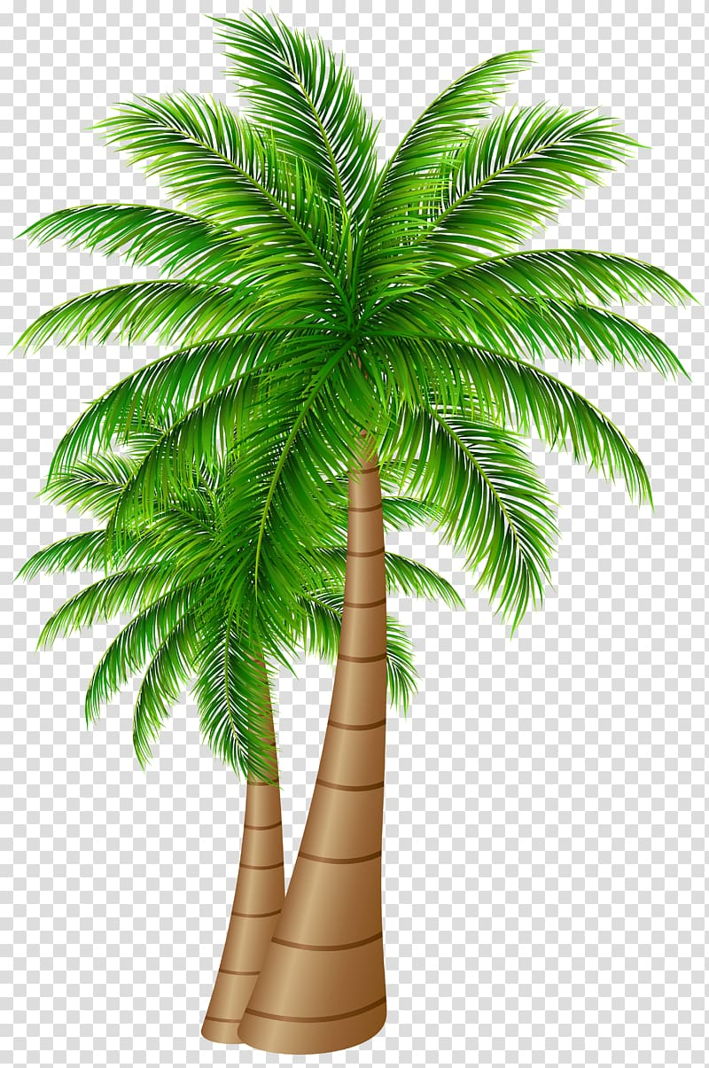 two coconut trees , Palm trees Coconut , Palm Trees Large PNG clipart