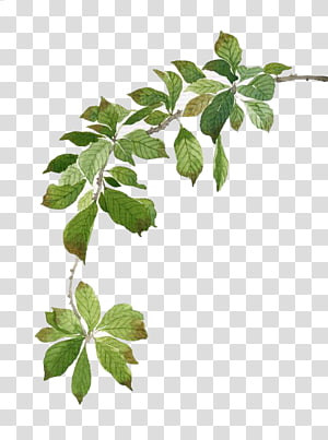 watercolor green leaves PNG